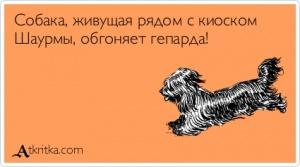 9_собака